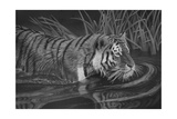 Taking a Dip Giclee Print by Stephen Ainsworth