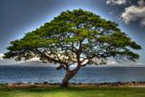 Tree Photographic Print by Robert Kaler