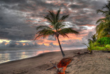 Palm Tree Photographic Print by Robert Kaler