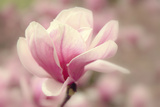 Magnolia Blossom Photographic Print by Jessica Jenney