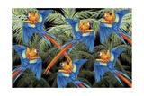 Palm Parrot Stampa giclée di James Mazzotta