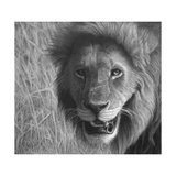Lion in the Massai Mara Giclee Print by Stephen Ainsworth