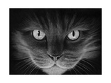 Hypno Cat Giclee Print by Stephen Ainsworth