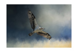Winter Osprey Giclee-trykk av Jai Johnson