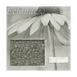 Echinacea I Giclee Print by Kory Fluckiger