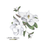 Magnolias Giclee Print by  Christine Anderson Illustration