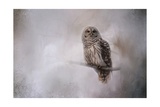 Winter Owl Giclee Print by Jai Johnson