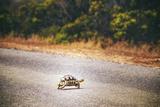 Turtle Fotografisk tryk af  Pixie Pics