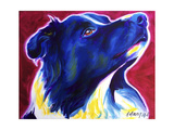 Border Collie - Bright Future Giclee Print by  Dawgart