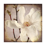 Paper Magnolia Closeup Giclee Print by  LightBoxJournal