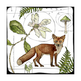 Watercolor Woodlands Fox Giclee Print by  Christine Anderson Illustration