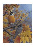 Robins Giclee Print by Robert Wavra