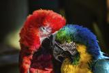 Uccelli Stampa fotografica di  Pixie Pics