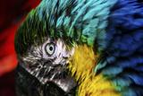 Penne d'uccello Stampa fotografica di  Pixie Pics