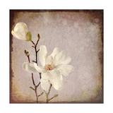 Paper Magnolia Duo Giclee Print by  LightBoxJournal