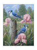 Geais bleus Reproduction procédé giclée par Robert Wavra