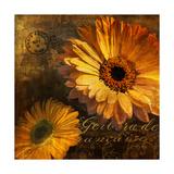 Golden Gerbera IV Giclee Print by  Art Licensing Studio