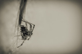 Spider 1 Photographic Print by  Pixie Pics