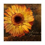 Golden Gerbera III Giclee Print by  Art Licensing Studio