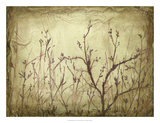 Dancing Branches I Premium Giclee Print by Jennifer Goldberger