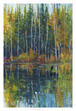 Pine Reflection I Premium Giclee Print by Tim OToole