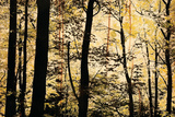 Golden Wood Prints by Lily Nicole