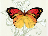 Butterfly Theme III Premium Giclee Print by Susan Davies