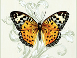 Butterfly Theme IV Premium Giclee Print by Susan Davies