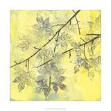 Fluttering Maple II Premium Giclee Print by Jennifer Goldberger