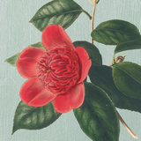Peony Posters by Sarah E. Chilton