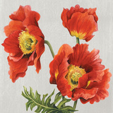 Poppies on Silk Prints by Judy Shelby
