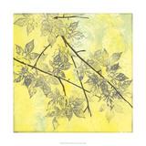 Fluttering Maple I Premium Giclee Print by Jennifer Goldberger
