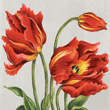 Tulips on Silk Posters by Judy Shelby