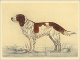 Hunting Dogs-Spaniel Posters by Andres Collot