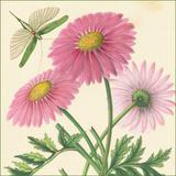 Pink Gerber Print by Louis Van Houtte