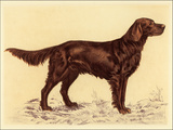 Hunting Dogs-Setter Prints by Andres Collot