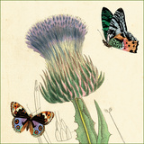 Field Thistle Giclée-Premiumdruck von Louis Van Houtte