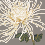 Glorious Whites II Prints by Judy Shelby