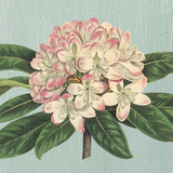 Rhododendron Prints by Sarah E. Chilton