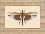 Delicate Dancer IV Prints by Sarah E. Chilton