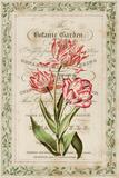 Botanic Garden Prints by Zachary Alexander