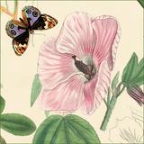 Hibiskus Giclée-Premiumdruck von Louis Van Houtte