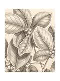 Tropical Connection I Giclée-Premiumdruck von Louis Van Houtte