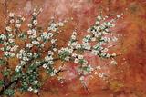Wild Plum Blossoms Art by Zachary Alexander