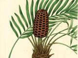 Palmetto III Premium Giclee Print by Zachary Alexander