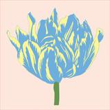 Soho Tulip I Posters by Zachary Alexander