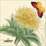 Star Thistle Prints by Louis Van Houtte