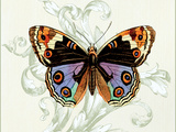 Butterfly Theme I Premium Giclee Print by Susan Davies