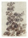 Sepia Flower Study II Premium Giclee Print by Tim OToole