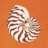 Cayman Quartet C Art by Judy Shelby